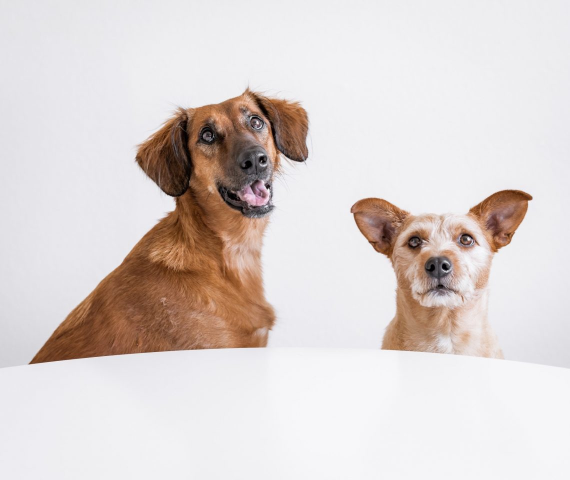 chiens